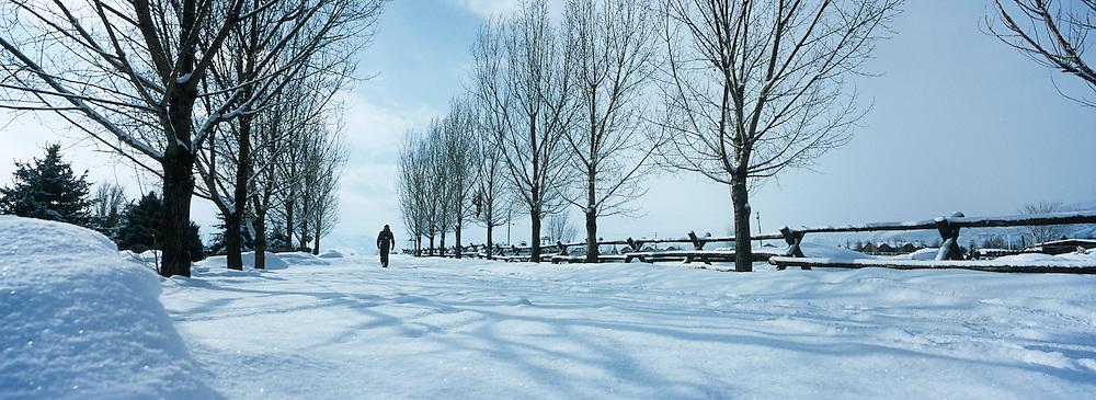 Person walking in snow between trees
