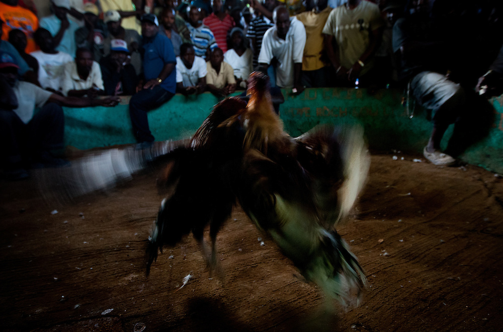 Two roosters fight it out in the pit while spectators looked on. <br /> <br /> Cockfighting or &quot;Cok Kages&quot; is Haiti's national passion.  Many argue that this sport serves as a form of entertainment and distraction where many could release their frustration and aggression in a safe arena.  The sport is legal in Haiti and less vicious since they don't attach blades to their feet. This event usually takes place on Sundays throughout Haiti.