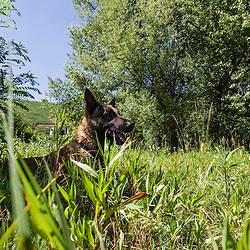 Entra&icirc;nement des &eacute;quipes cynophiles de la Gendarmerie Nationale. Chiens de recherche de produits stup&eacute;fiants, chiens d'attaque et de recherche de personnes.<br /> Juin 2014 / FRANCE