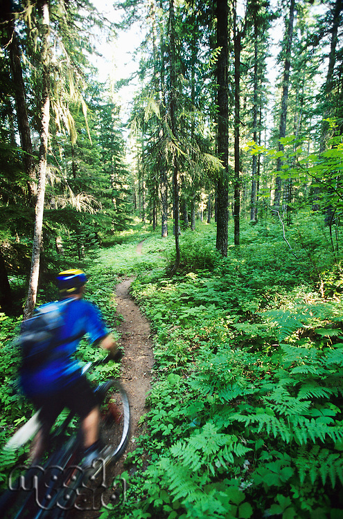 Biker riding on forest trail