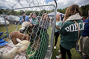 A group of Ohio University students enjoys the alpaca display/petting area on Saturday, September 13, 2014 at Pawpaw Festival. Photo by Katelyn Vancouver