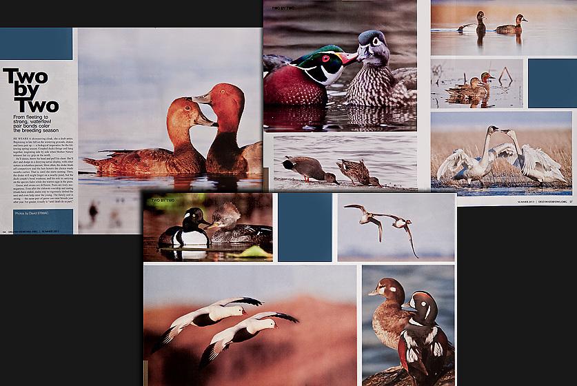 Delta Waterfowl Photo Essay Summer 2013