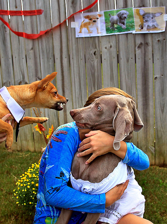 Alix Danchenko shields her dog Clover Green from Dorito Burrito during a wedding ceremony for the 2 dogs on October 7, 2012.  Danchenko and her friend decided the dogs licked each other too much and wanted them to be married.