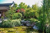 Japanese Garden, Portland, Oregon, USA, water feature, pond, shrubs, flowers, pagoda, 200809040942.<br />
