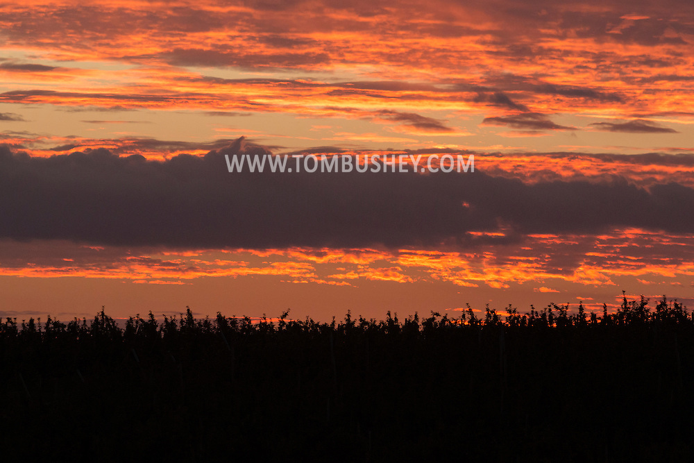 Hamptonburgh, New  York - Sunset clouds  over an apple orchard on Sept. 27, 2015.