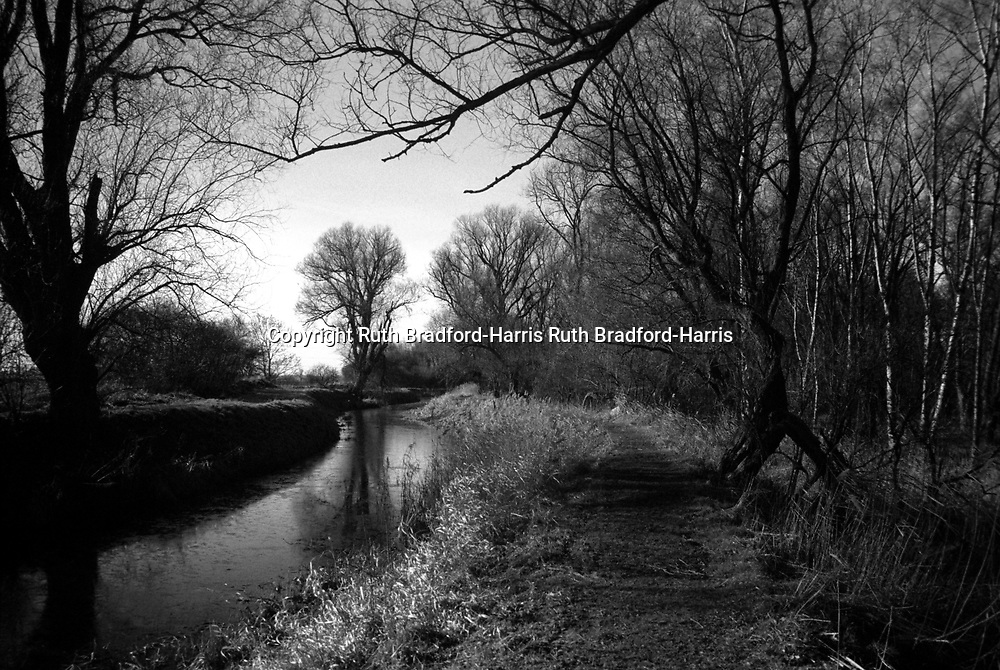 A gloriously sunny day in mid-Winter along the banks of the River Slea, near Sleaford, Lincolnshire. The water surface is beginning to freeze.<br /> <br /> (One of a pair of images in this gallery. This is a high-resolution scan from a 35mm original in my pre-digital archive).