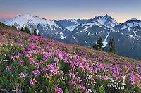 Ruth Mountain and Mount Shuksan viewed from wildflower meadows of Hennegan Peak, Mount Baker Wilderness North Cascades Washington