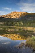 Wetlands near Moose River, Jasper National Park Alberta