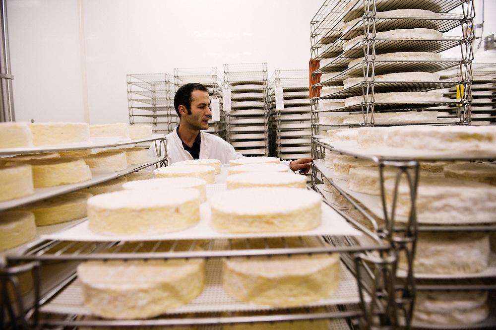 tri des fromages. Ferme des Trente Arpents. Ferriere, France. 13 novembre 2009. Photo: Antoine Doyen, pour Challenges