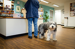 A dog waits in reception at Rushcliffe Veterinary Centre, West Bridgford, Nottingham, UK.<br />