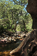 Water flows in a stream near the Arizona Trail in Gardner Canyon in the Santa Rita Mountains of the Coronado National Forest in the Sonoran Desert north of Sonoita, Arizona, USA.