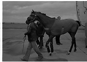 Arrival of Ninski Major and Torus.   (M95)..1979..11.10.1979..10.11.1979..11th October 1979..With the Irish St Ledger to be run, on Saturday 13th Oct, two of the race favourites landed at Dublin Airport today. Ninski Major to be ridden by Willie Carson and Torus to be ridden by John Reid unloaded from the Aer Turas animal transport..Ninski Major is pictured stretching his legs on the tarmac at Dublin Airport.