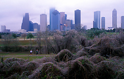 Stock photo of an icy winter morning in the park along the Houston skyline