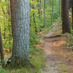 A trail in the forest at the O.W. Stewart Preserve in Kingston, Massachusetts.