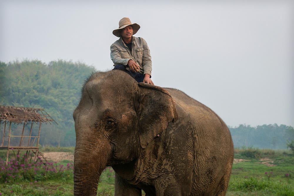 Elephant and Mahout at Anantara's Golden Triangle Asian Elephant Camp.