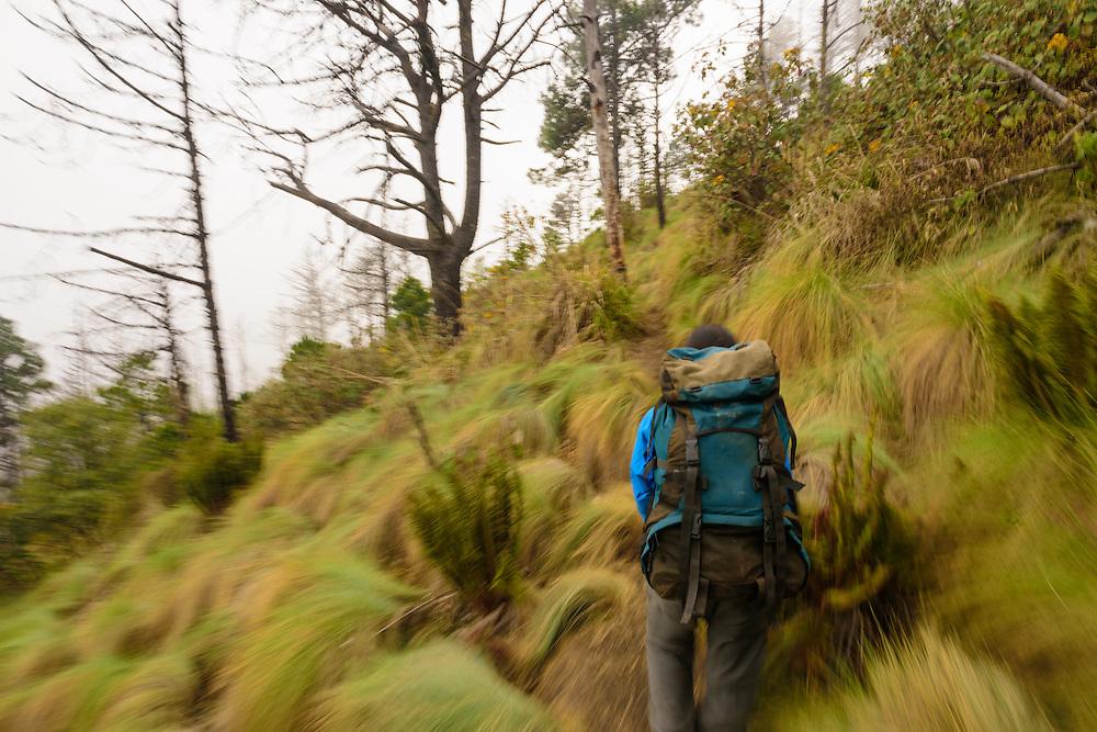 Man with a backpack climbing Acatenango volcano, Guatemala.