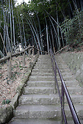 steep stair leading up towards a bamboo groove Japan