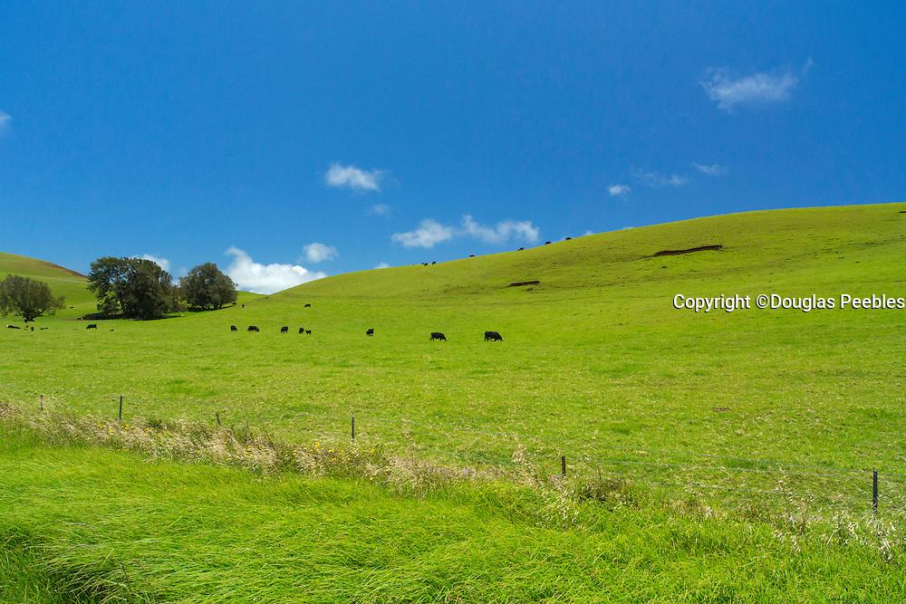 North Kohala ranch land, Island of Hawaii