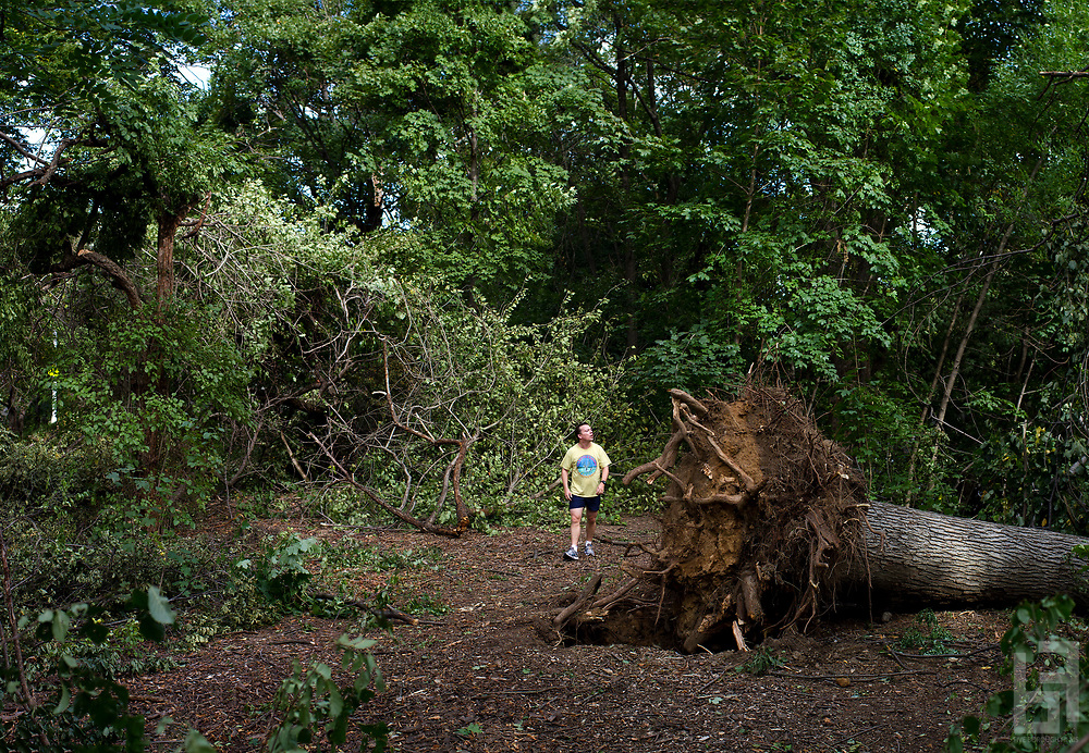 "From the series ""A Tree Falls in Brooklyn"""
