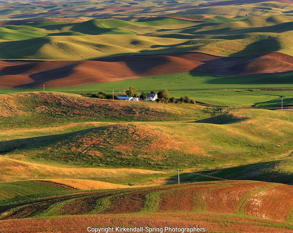 AA07294-04.....WASHINGTON - Palouse Country farmlands from Steptoe Butte State Park.