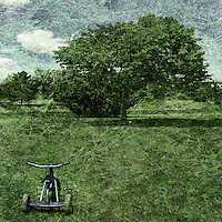 A conceptual image of a small childs tricycle in a green field with a large tree in full leaf