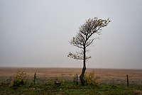 A lone tree sits next to a fence on a lonely Texas highway.