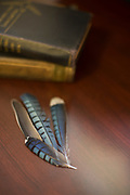 Still life, feathers, desk, old books,