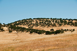 Oak woodlands landscape, at Tulloch Lake turnoff, oak trees, grassy terrain, near Don Pedro Lake California, USA.  Photo copyright Lee Foster.  Photo # california120610