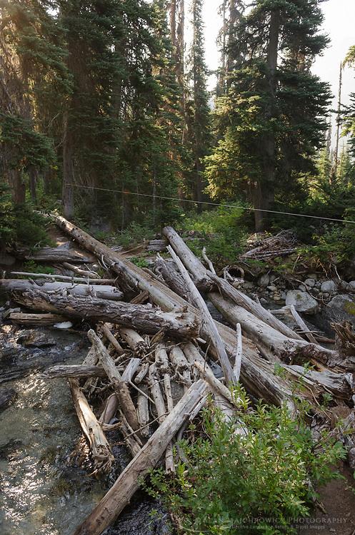 Crude makeshift bridge over creek on trail into Marriott Basin, Coast Mountains British Columbia
