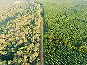 Aerial photograph of native forest (on the left) & farmed pine tree forest, Glasshouse Mountains, Queensland, Australia