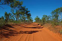 Trees line the dusty dirt road to Cape Leveque on the Dampier Peninsula