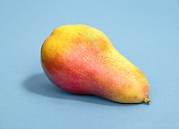 red and yellow forelle pear on blue background