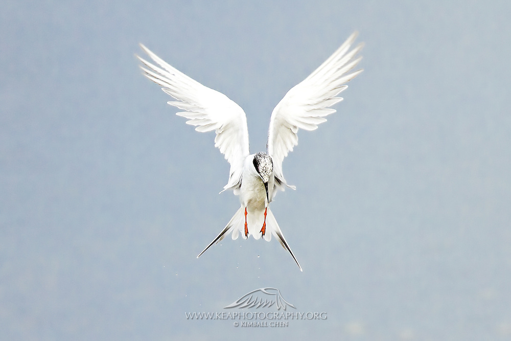 And God said, &quot;Let the water teem with living creatures, and let birds fly above the earth across the expanse of the sky.&quot;  - Genesis 1:20<br />