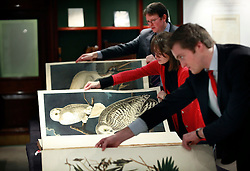 © under license to London News Pictures. (06/12/10) Three of Audubon's Bird's of America books on display ahead of Sotheby's London Sale of Magnificent Books, Manuscripts and Drawings due to take place on 7th Dec 2010, from the collection of Frederick, 2nd Lord Hesketh, The Property of Trustees of the 2nd Baron Hesketh's Will Trust. Photo credit should read: Olivia Harris/ London News Pictures