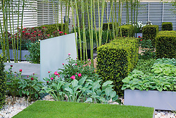In the Grove Garden. Bamboo Phyllostachys iridescens with yew hedging, peonies, glass dividers and raised beds. Design: Christopher Bradley-Hole - Chelsea 2005