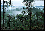 01: RAINFOREST RESCUE DISAPPEARING FORESTS
