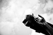 Lucania Mistica - Tracce della Pietà Popolare tra Sacro e Profano