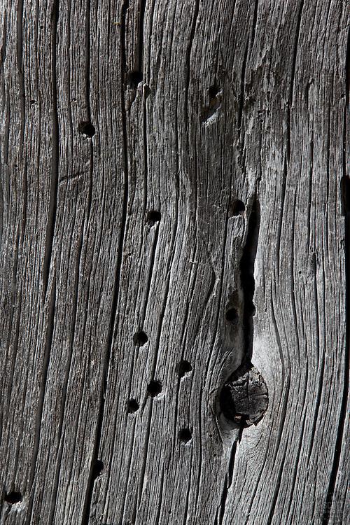 Closeup of an old dead tree in Tahoe.