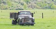 Antique GMC Truck in field