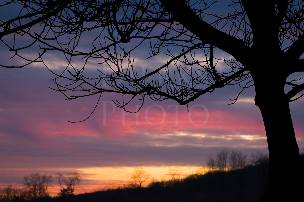 Sunset in pink and blue sky colors, framed by black silhouetted tree limbs of a hawthorne, Pennsylvania, PA, USA.