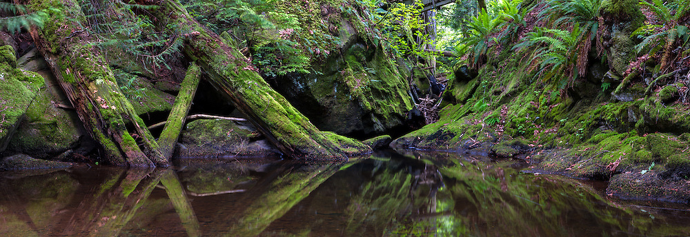 Panorama of fallen trees reflected in the Chase River below a bridge at Colliery Dam Park in Nanaimo, British Columbia, Canada