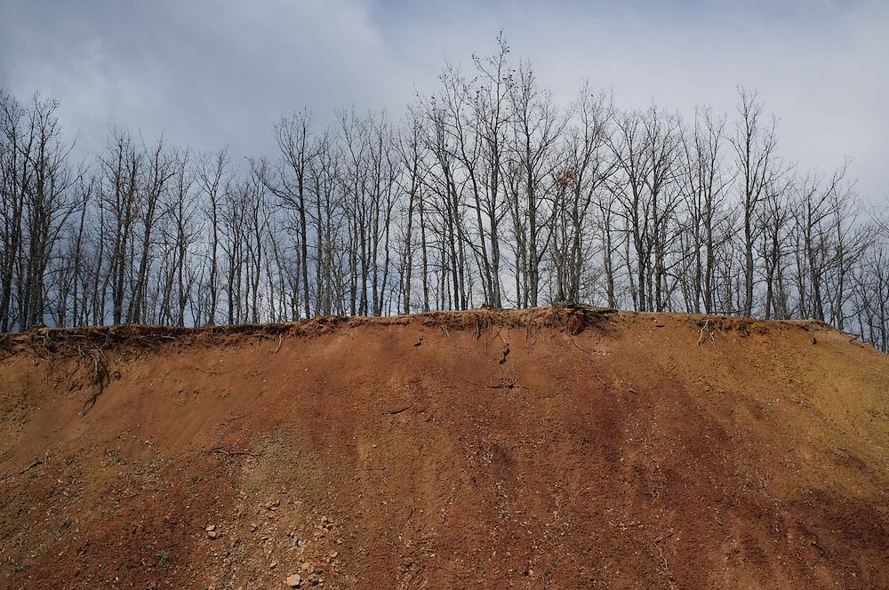 Trees in Vrontero, Greece