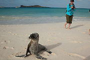 Tourists near a Galapagos sea lion (Zalophus californianus) on the beach of Espanola Island, Galapagos Archipelago - Ecuador. (Fully released 82010Exp2)