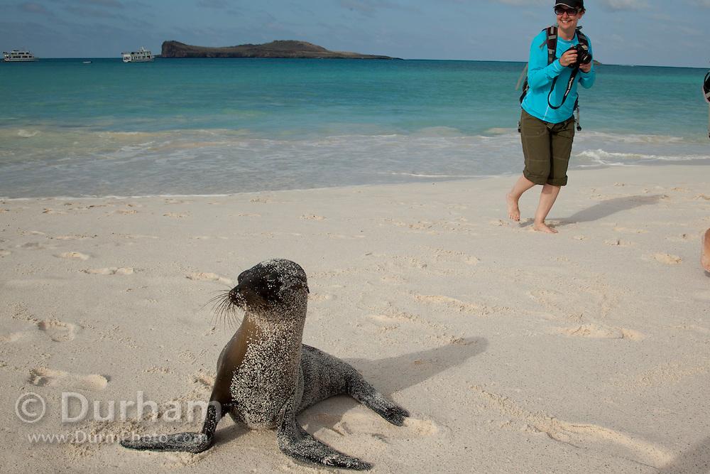 Tourists near a Galapagos sea lion (Zalophus californianus) on the beach of Espanola Island, Galapagos Archipelago - Ecuador. (Fully released 82010Exp2)