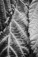 """As John Michel said, """"The mathematical rules of the universe are visible to men in the form of beauty."""" I enjoy using the medium of black and white photos to accentuate the beauty of the patterns deep in nature that you can find even on just a walk to the mailbox."""