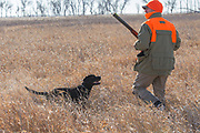 "Greg Windschill and his Lab ""Henry"" hunt pheasants near Mirchell South Dakota"