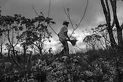 Popula&ccedil;&otilde;es Tradicionais de apanhadores de flores Sempre Vivas situada entre a Serra do Espinha&ccedil;o e a Serra do Cip&oacute;<br /> Popula&ccedil;&atilde;o de Raiz no munic&iacute;pio de Presidente Kubitschec vive da colheita de flores sempre viva em especial do capim dourado e do artesanato do capim dourado. S&atilde;o tamb&eacute;m agricultores e quilombolas reivindicando o reconhecimento do territ&oacute;rio. Est&atilde;o pressionados pela presen&ccedil;a de grilagem de eucaliptos que chegam as cercanias da comunidade.<br /> campo Carambola, colheita de Sempre Vivas