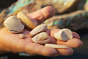 Fossil opals on a miner's palm in Coober Pedy, Australia.
