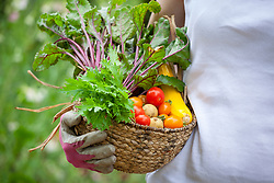 Basket of harvested vegetables including beetroot, tomatoes, potatoes and courgettes.