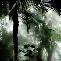 Palm trees and mist